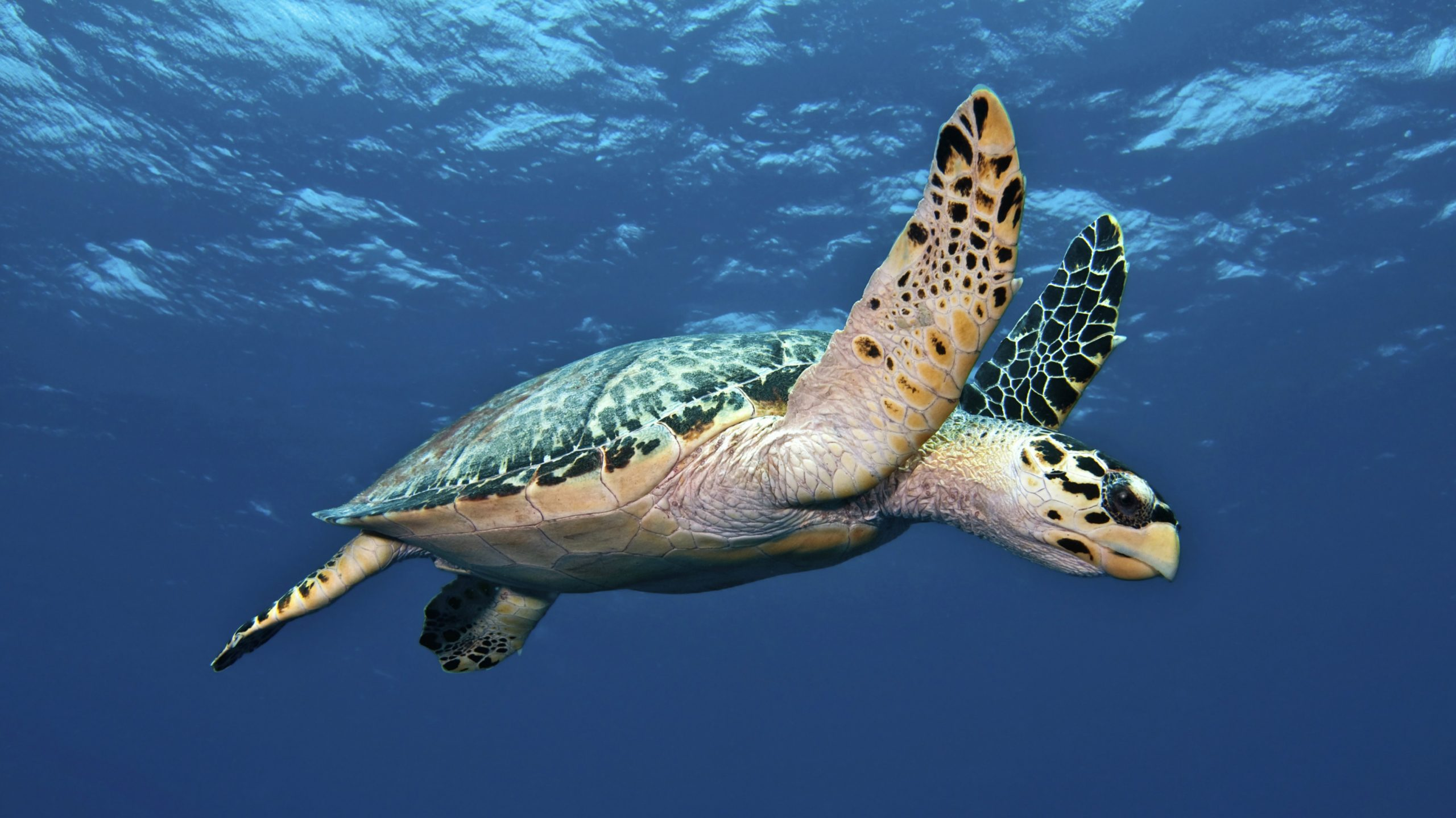 Lifespan of a Turtle – Tortoises and Their Owners