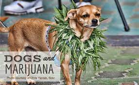 Is CBD Good For Dogs?